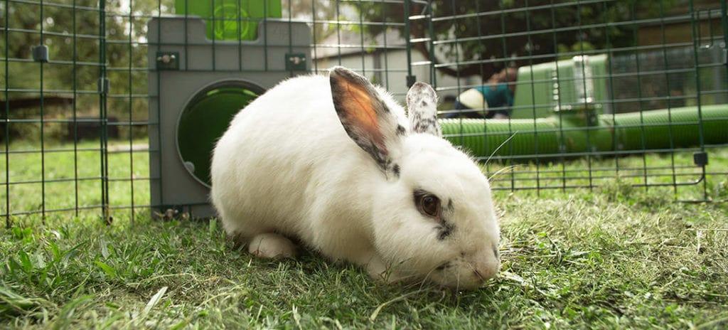 Een wit konijn met zwarte vlekken in het gras