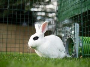 Een zittend wit konijn met zwarte vlekken in het gras 2