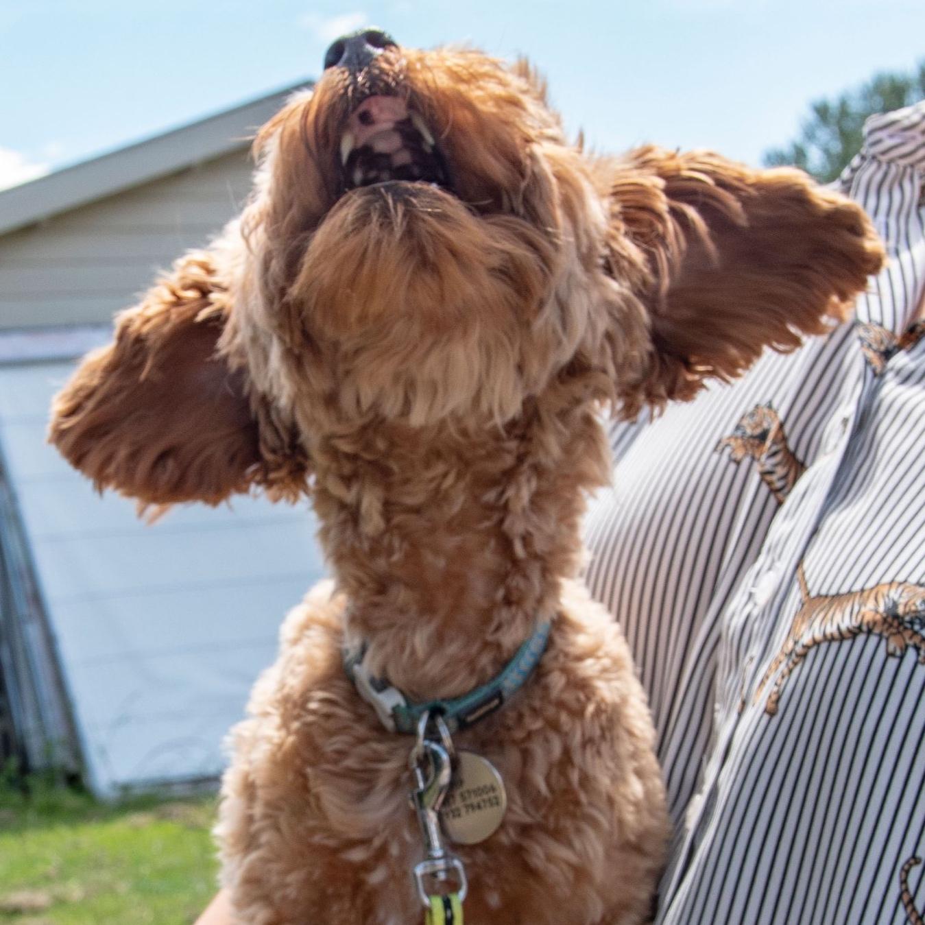 Spelletjes voor verjaardag hond